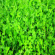 Green Clover - VideoHive Item for Sale