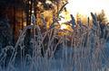 Winter scene - PhotoDune Item for Sale