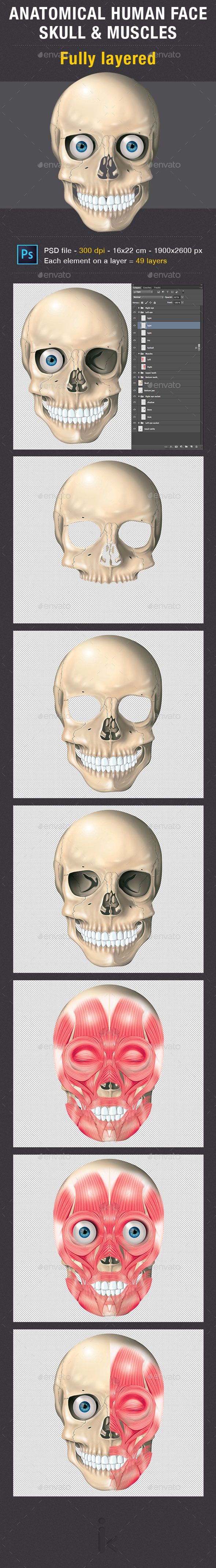 GraphicRiver Anatomical Human Skull and Muscles 8946437