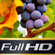 Fresh Grapes with Green Leaves - VideoHive Item for Sale