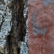 12 Natural bark backgrounds - GraphicRiver Item for Sale