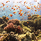 Colorful Fish on Vibrant Coral Reef 951 - VideoHive Item for Sale