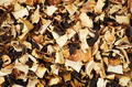 top view of mixed dried mushrooms - PhotoDune Item for Sale
