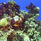 Colorful Fish on Vibrant Coral Reef 967 - VideoHive Item for Sale