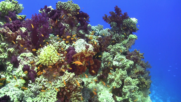 Colorful Fish on Vibrant Coral Reef 967