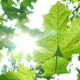 Foliage Through Rays 8 - VideoHive Item for Sale
