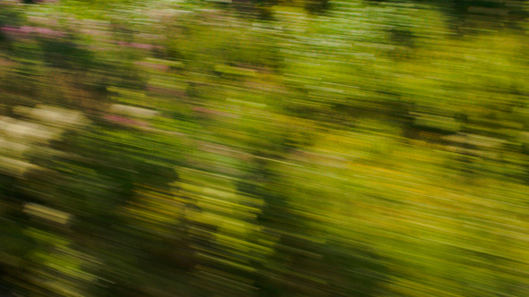 View Of Passing Green Trees From Speed Train