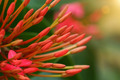 Red flower spike in the garden. - PhotoDune Item for Sale