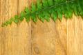 green leaves of fern on wood. - PhotoDune Item for Sale