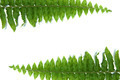 green leaves of fern isolated on white - PhotoDune Item for Sale