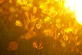 Grass flowers sunset - PhotoDune Item for Sale