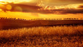 Yellow sunset over farmland - PhotoDune Item for Sale