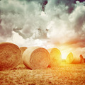 Many dry haystack in sunset light - PhotoDune Item for Sale