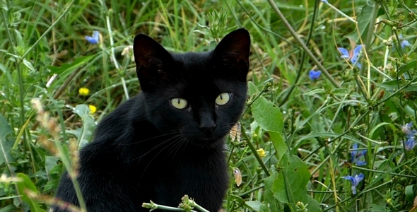 Black Cat in the Garden 1