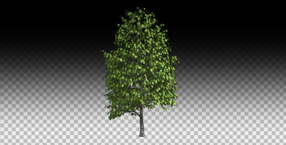 growing tree by nido3d