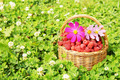 Basket full of raspberry and flowers on green grass - PhotoDune Item for Sale