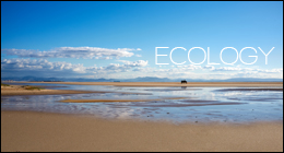 ECOLOGY Nature & Animals
