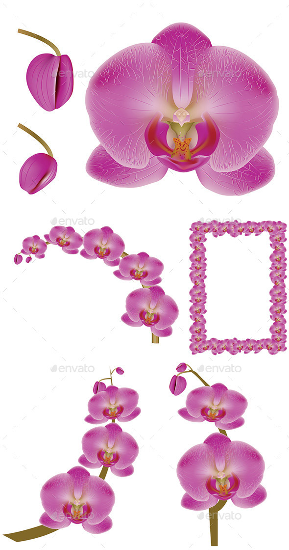 GraphicRiver Flower Orchid 8975847