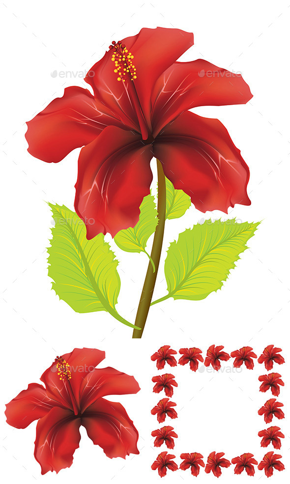 GraphicRiver Red Hibiscus 8975850