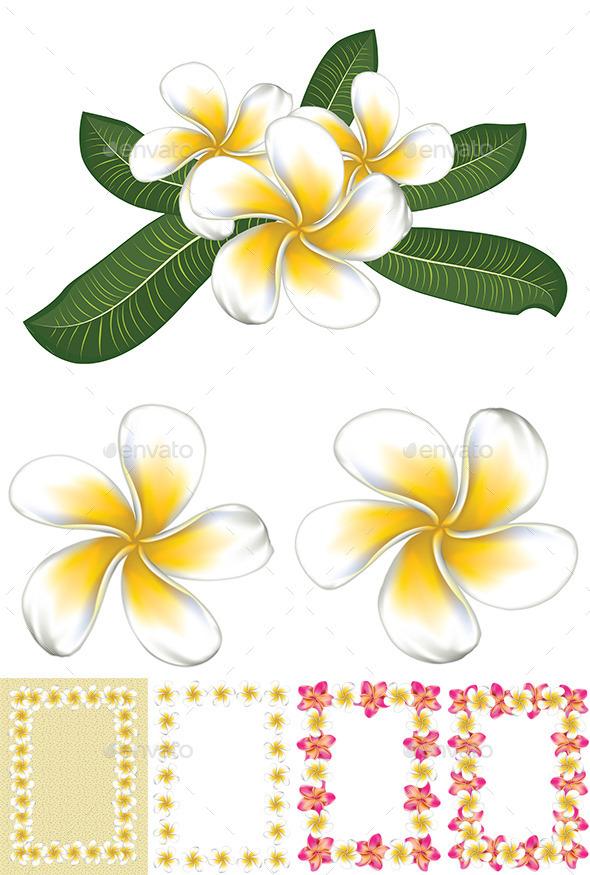 GraphicRiver White Plumeria Frangipani 8975858