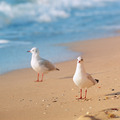 seagulls, sea and sandy beach - PhotoDune Item for Sale