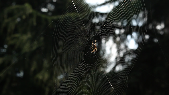 Spider In His Web