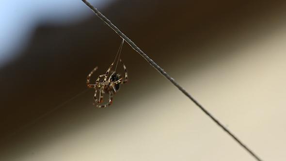Spider Beginning His Web