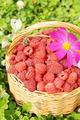 Wicker basket full of ripe raspberry and flowers - PhotoDune Item for Sale