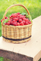 Wicker basket full of ripe raspberry on the painted wooden bench - PhotoDune Item for Sale