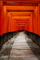 Kyoto Red Gate Torii Japan - PhotoDune Item for Sale