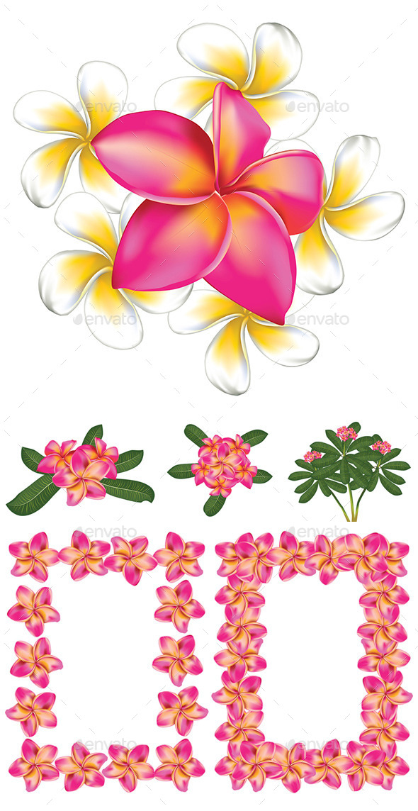 GraphicRiver Plumeria Flowers 8987338