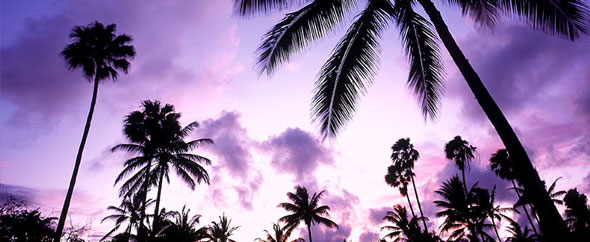 Purple-sunset-with-palm-trees-background-1