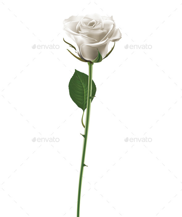 GraphicRiver White Rose 8989188