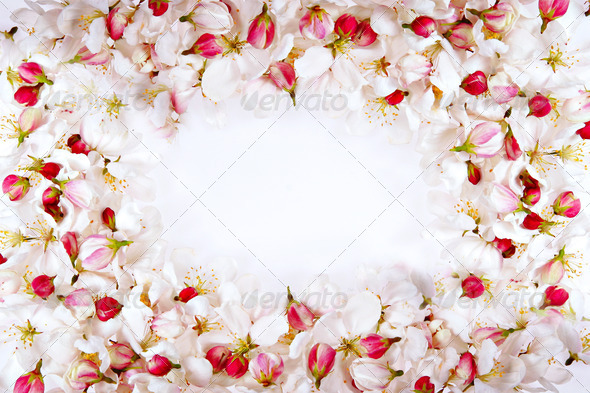 cherry blossom petals frame - Stock Photo - Images