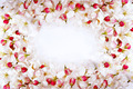 cherry blossom petals frame - PhotoDune Item for Sale
