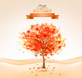Autumn tree with orange leaves. - PhotoDune Item for Sale