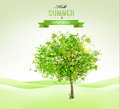 Summer background with a green tree.  - PhotoDune Item for Sale