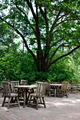 Tables under Big Tree - PhotoDune Item for Sale