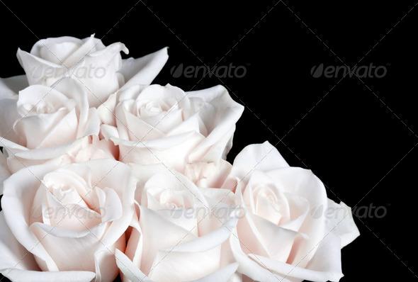 bundle of white rose
