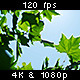 Sun & Sky Shining Through Leaves 2/2 - VideoHive Item for Sale