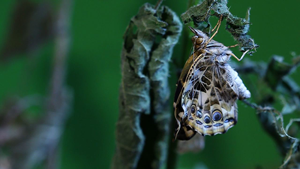 Butterfly Relaxing on a Branch