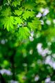 Spring forest background - PhotoDune Item for Sale