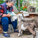Farmer feeding a baby goat with a milk bottle  - PhotoDune Item for Sale