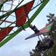 Fair Park Attraction - Flying Wheel - VideoHive Item for Sale