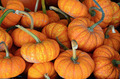 Cute mini pumpkins - PhotoDune Item for Sale