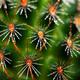 Cactus close up  - PhotoDune Item for Sale