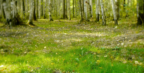 Green Grass In The Forest 2