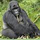 GorillasMusic
