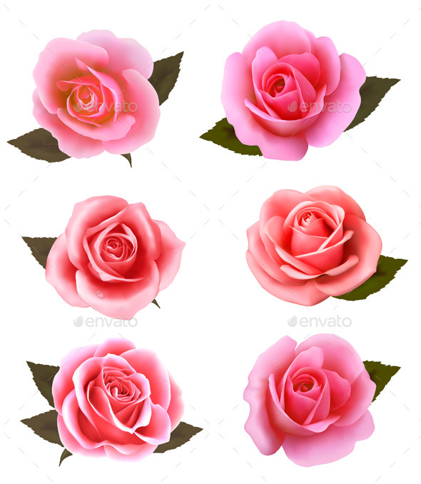 GraphicRiver Set of Pink Roses 9000088