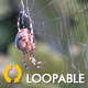 Spider On Forest Web - 1 - VideoHive Item for Sale